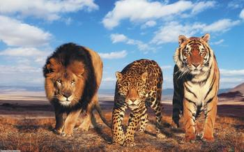 Aslan and Friends